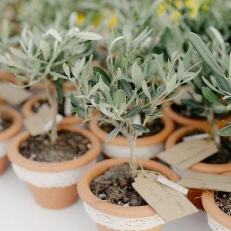 vaso de plantas festa eco-friendly - it mãe