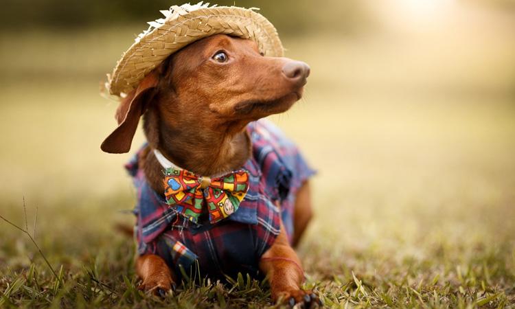 It Mãe: festa junina em casa - cachorro com roupinha de festa junina