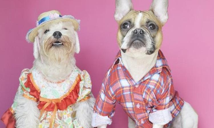 It Mãe: festa junina em casa - casal de cachorros com roupas de festa junina